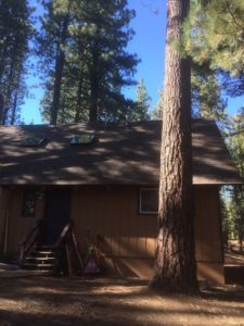 Local Tree Service in South Lake Tahoe, CA