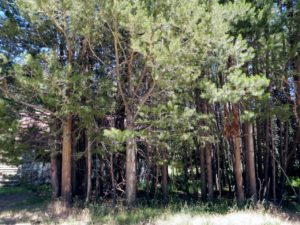 Tree Company in [ln]