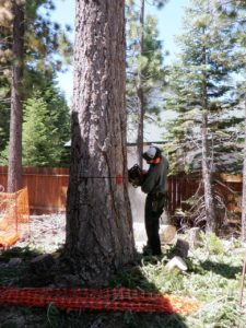 tree company in South Lake Tahoe, CA