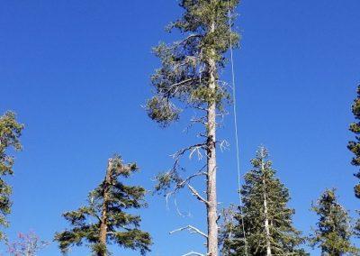 Tree Companies
